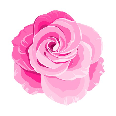 pink and green: Red rose isolated on white background. Vector illustration.