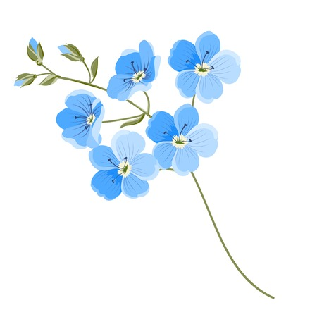 flax seed: Linen flower isolated over white background. Vector illustration.