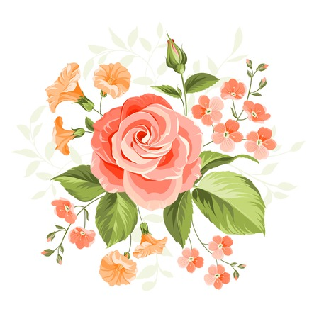 passion flowers: Pink beautiful rose over white background. Vector illustration.