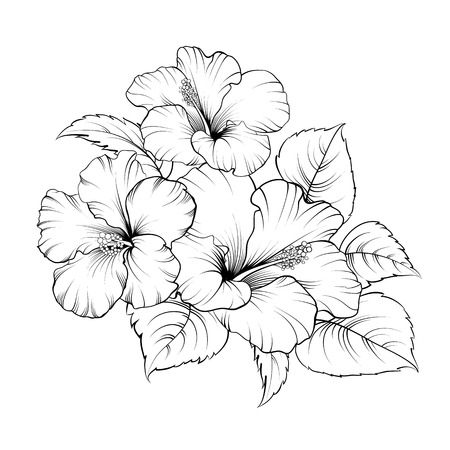 Flower of mallow on a white background. Vector illustration.