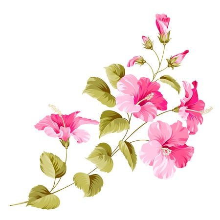 single flowers: Flower hibiscus tropical plant. Vector illustration.