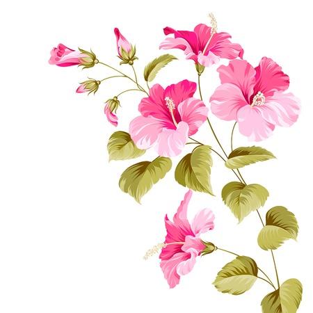 꽃 히비스커스 열대 식물. 벡터 일러스트 레이 션.