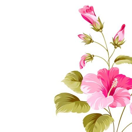 plante tropicale: Fleur d'hibiscus plante tropicale isol� sur blanc. Vector illustration.
