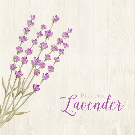 aromatic: Aromatic laveder over gray wooden panels. Vector illustration.