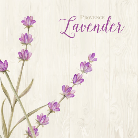 panels: Aromatic laveder over gray wooden panels. Vector illustration.
