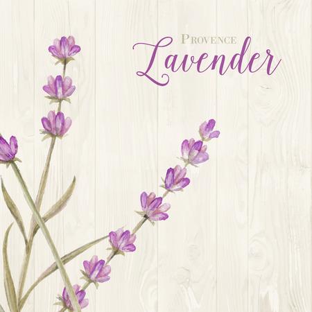 lavender oil: Aromatic laveder over gray wooden panels. Vector illustration.