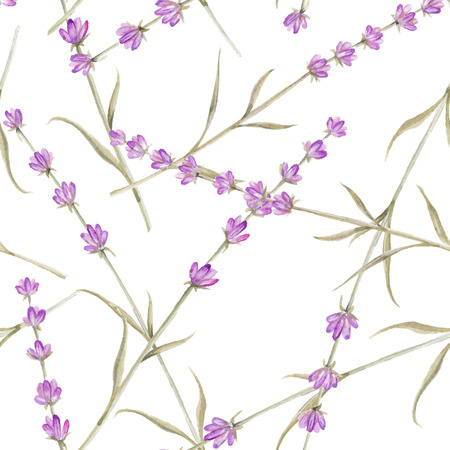 fabric swatch: Watercolor pattern with Lavender for fabric swatch. Vector illustration. Illustration