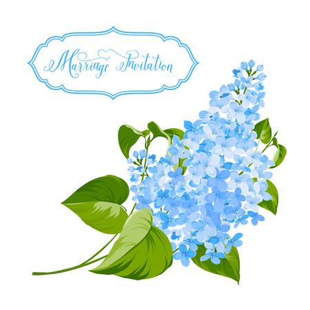 Primavera siringa flowers background per il design romantico. Illustrazione vettoriale