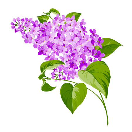 Primavera siringa flores de fondo para el diseño romántico. Ilustración vectorial
