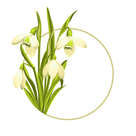 Beautiful white snowdrop flowers for spring design. Vector illustration. Ilustrace