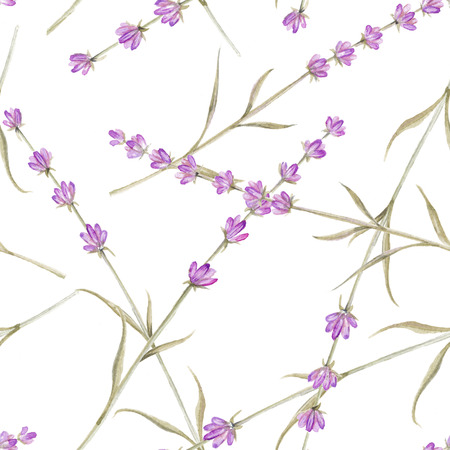 herbs of provence: Romantic vintage pattern with violet lavender flowers of provence.