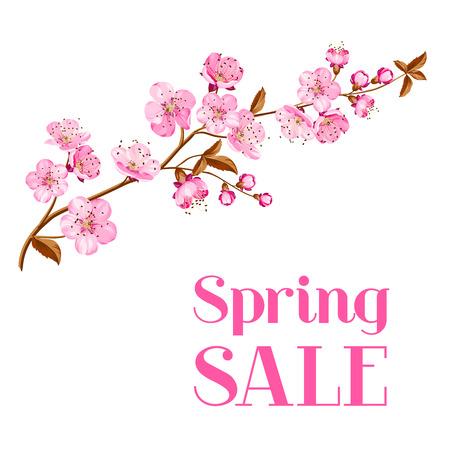 Cherry blossom card on white. Vector illustration. Zdjęcie Seryjne - 39579455