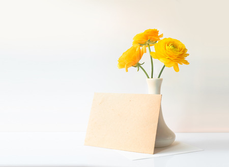 buttercup: Buttercup yellow flower in vase over white background. Stock Photo