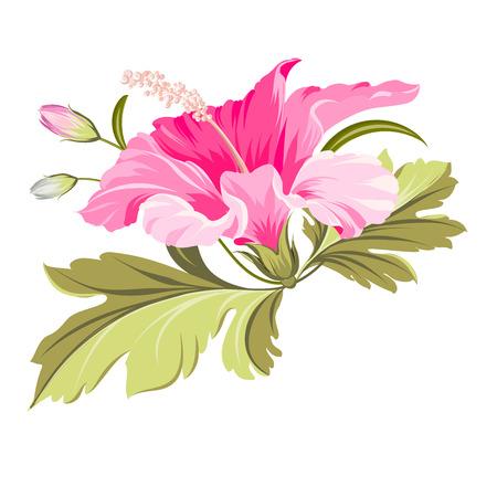 Hibiscus single tropical flower over white background. Vector illustration. Stock Illustratie