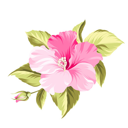 Hibiscus single tropical flower over white background. Vector illustration. Çizim