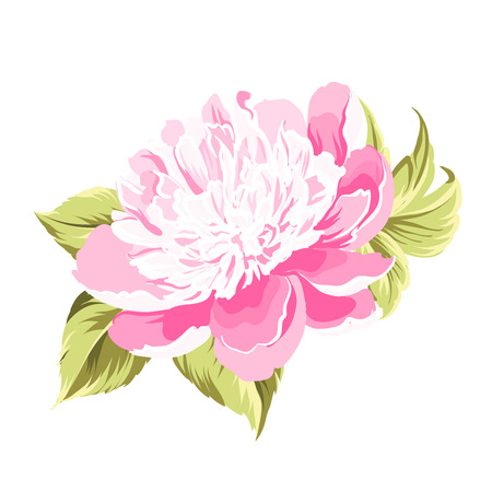 Peony bud flower over white background. Vector illustration.