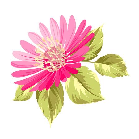 Chrysanthemum bud flower over white background. Vector illustration.