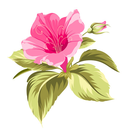 Hibiscus single tropical flower over white background. Vector illustration. Vettoriali