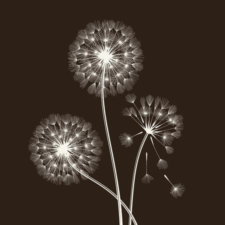 dispersal: Blowball seeds over black backgroud. Vector illustration.