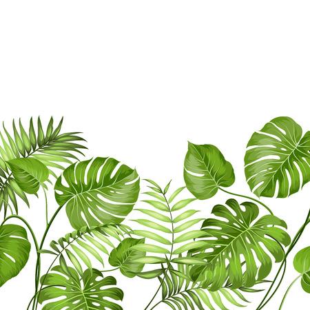 hojas parra: Hojas tropicales diseñan para tarjeta de texto. Ilustración del vector. Vectores