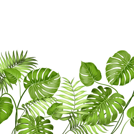 jungle: Tropical leaves design for text card. Vector illustration.