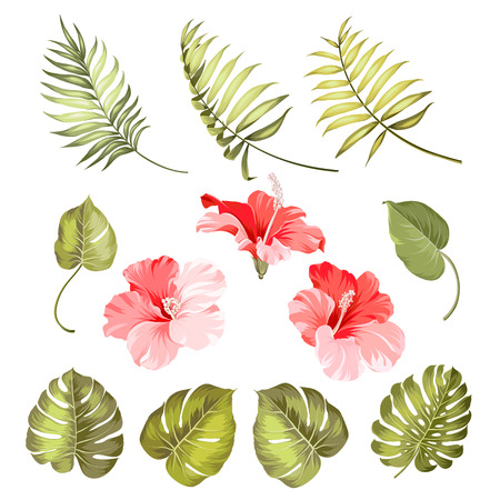 foliage: Set of hibiscus tropical flower parts over white background. Vector illustration.
