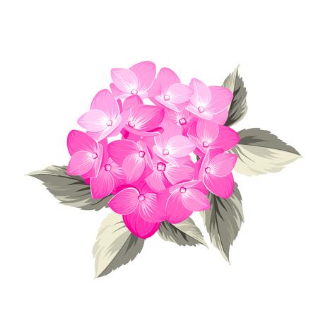 flores moradas: Flor del Hydrangea. Hortensias realista Roja. Ilustración de flores. Arte del vintage. Puede ser utilizado para la tarjeta de invitación. Ilustración del vector.