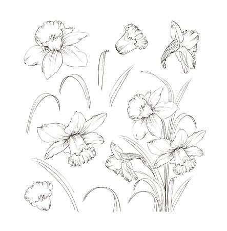 Set van lijntekening narcissen. Narcissen bloeien bundel. Zwarte bloemen geïsoleerd dan wit. Bloemen contour collectie. Vector illustratie.