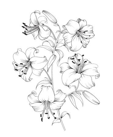 Groep van lelie bloemen. Bloemen achtergrond met bloeiende lelies op een witte achtergrond. Vector illustratie. Stock Illustratie