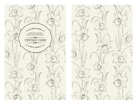 daffodil: Daffodil flower or narcissus isolated on gray book cover. Floral pattern with narcissus. Vector illustration.