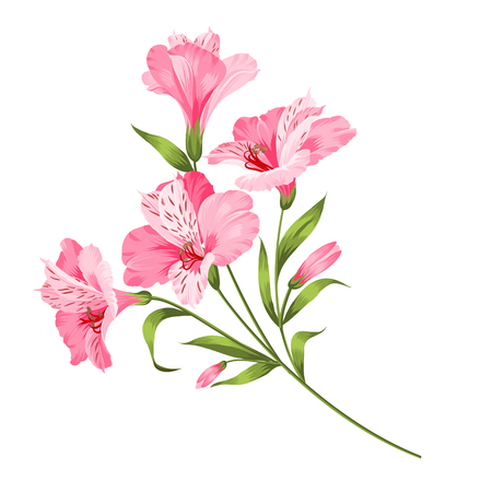 Alstromeria pink branch isolated on white. Beautiful alstroemeria for your personal design. Vector illustration.