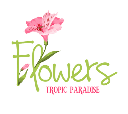 alstromeria: Tropic paradise Flowers. Hand drawn sign. Alstromeria pink branch isolated on white. Beautiful alstroemeria for your personal design. Vector illustration.