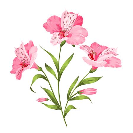 alstromeria: Alstromeria pink branch isolated on white. Beautiful alstroemeria for your personal design. Vector illustration.