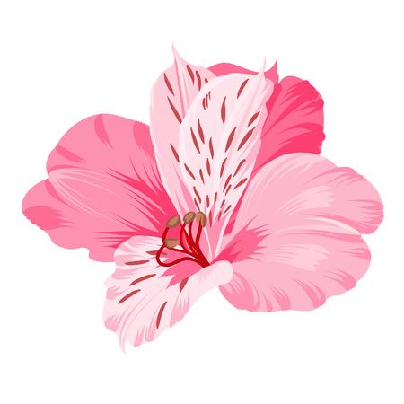 alstromeria: Alstromeria isolated on white. Beautiful alstroemeria for your personal design. Vector illustration.
