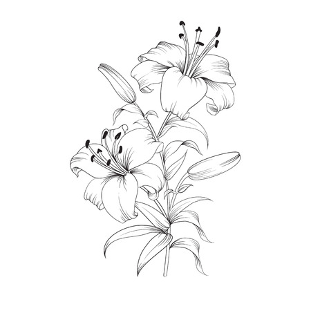 with sympathy: White lily isolated on a white background. Card with blooming lily. Vector illustration.