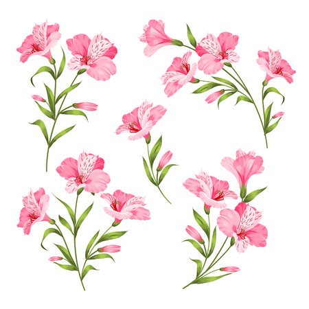 Alstromeria pink branch isolated on white. Beautiful alstroemeria collection for your personal design. Flower branches set. Vector illustration. Иллюстрация