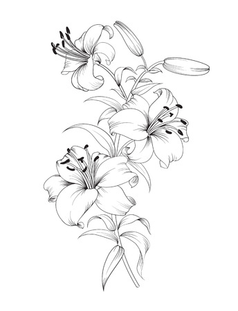 lilies: Group of lily flowers. Floral background with blooming lilies isolated on white background. Vector illustration.