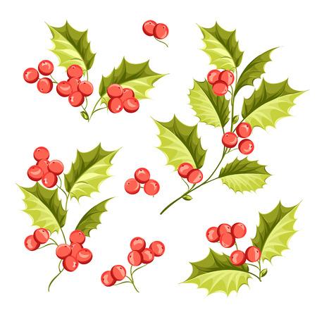 muerdago: Conjunto de la Navidad vacaciones de mu�rdago. Feliz nuevo a�o 2016. Ilustraci�n del vector. Flor de Navidad.