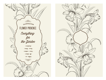 daffodil: Daffodil flower or narcissus isolated on gray. Floral pattern with narcissus. Vector illustration.