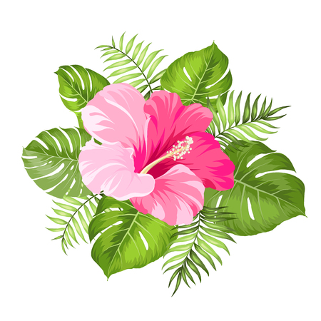 hibiscus flowers: Fiore tropicale isolato su sfondo bianco. Illustrazione vettoriale.