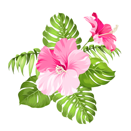 Tropical flower isolated over white background. Vector illustration. Çizim