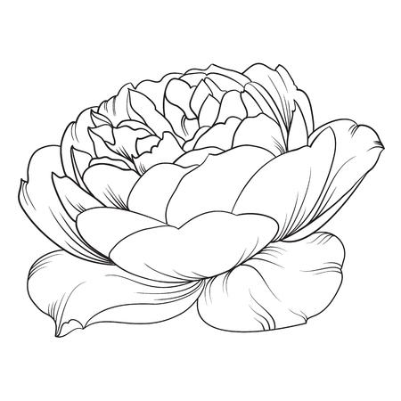 unfold: Silhouette of rose. Rose flower. Botany set. Black and white illustration. Isolation vector. Flower blossom. Isolated object. Vector illustration. Illustration