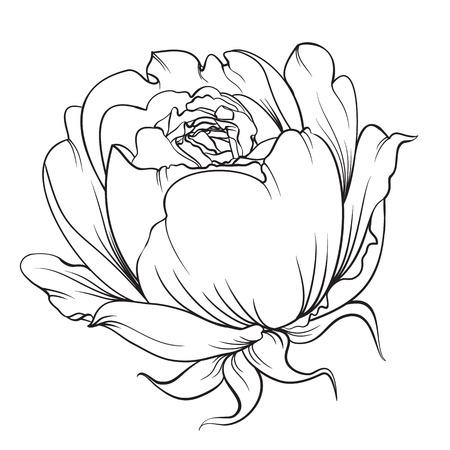 isolation: Silhouette of rose. Rose flower. Vintage flowers. Black and white illustration. Isolation vector. Isolated object. Vector illustration.