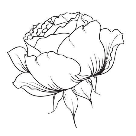 isolation: Silhouette of rose. Rose flower.Botany set. Black and white illustration. Isolation vector.  Isolated object. Vector illustration. Illustration