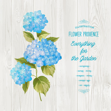 wooden panel: Blue realistic hydrangea over wooden panel. Illustration of flowers. Vintage art. Can be used for invitation card. Vector illustration.