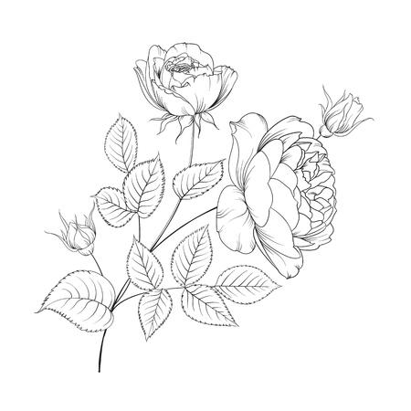 rosa negra: Ramo de rosas aislados sobre fondo blanco. rosas de la flor en el fondo blanco. Mop rosas cabeza de flor aislado contra blanco. hermosas flores de colores.