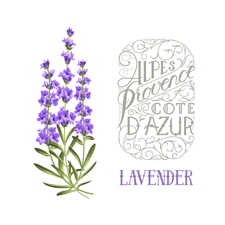 The lavender elegant card with frame of flowers and text. Lavender garland for your text presentation. Label of soap package. Label with lavender flowers. Stock Vector - 49344195
