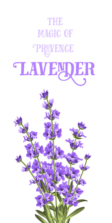 lavender flower: The lavender elegant card with frame of flowers and text. Lavender garland for your text presentation. Label of soap package. Label with lavender flowers.