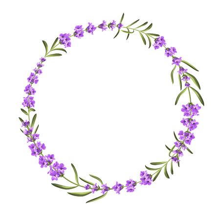 Bunch of lavender flowers on a white background Illustration