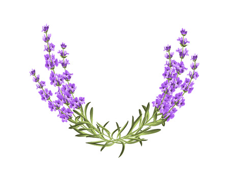 Bunch of lavender flowers on a white background Ilustração